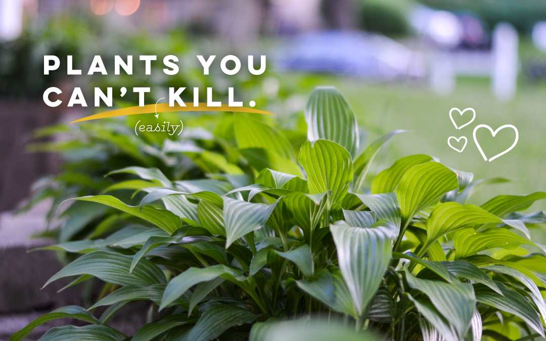 Landscaping Plants You Can't (Easily) Kill