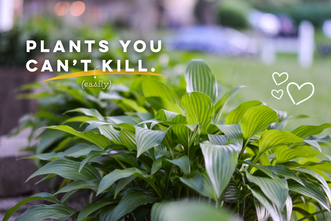 Landscaping plants you can't easily kill | Boom Brothers Property Solutions, Madison, WI